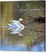 Graceful Swan Canvas Print