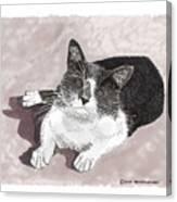 Gracie Jacks Cat Now Canvas Print