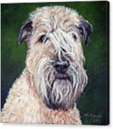 Gracie, Soft Coated Wheaten Terrier Canvas Print