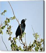Grackle Cackle Canvas Print