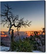 Grand Canyon Lone Tree At Sunset Canvas Print