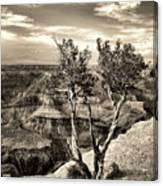Grand Canyon Lone Tree Canvas Print