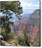 Grand Canyon North Rim - Through The Trees Canvas Print