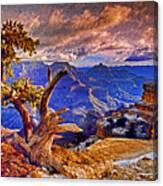 Grand Canyon Pine Canvas Print