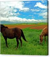 Grand-pre Horses Canvas Print