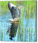Grand Spring Goose   Canvas Print