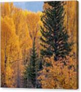Grand Teton Fall Canvas Print