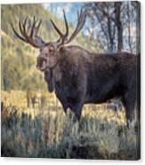 Grand Teton Moose Canvas Print