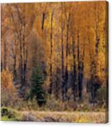 Grand Tetons Fall Canvas Print