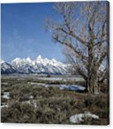 Grand Tetons From Gros Ventre Canvas Print