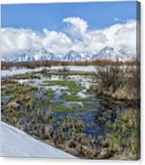 Grand Tetons From Willow Flats In Early April Canvas Print