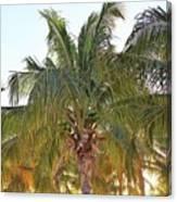 Grand Turk Palms On The Beach Canvas Print