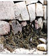 Granite And Seaweed Canvas Print