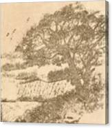 Grape Arbor On Brown Canvas Print