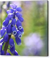 Grape Hyacinth II Canvas Print