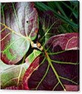 Grape Leaf Sheen Canvas Print