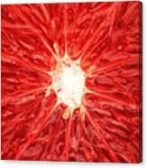 Grapefruit Close-up Canvas Print