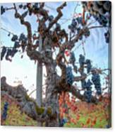 Grapes Aloft Canvas Print