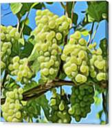 Grapes Not Wrath Canvas Print