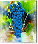 Grapes Of The Vine Canvas Print