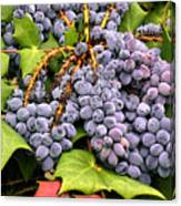 Grapes With Leaves Canvas Print