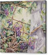 Grapevine Laurel Lakevineyard Canvas Print