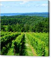 Grapevines On Old Mission Peninsula - Traverse City Michigan Canvas Print