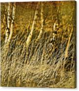 Grass And Birch Canvas Print