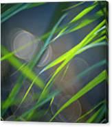 Grass And Evening Light Canvas Print