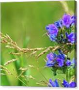 Grass And Flower  Canvas Print