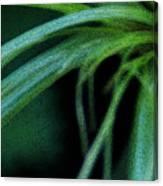 Grass Dance Canvas Print