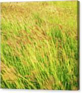 Grass Field Landscape Illuminated By Sunset Canvas Print