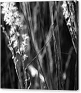 Grass Flowers Canvas Print