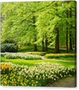 Grass Lawn With Daffodils  Canvas Print