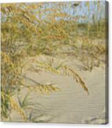 Grass On The Beach Sand Canvas Print
