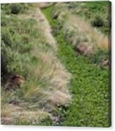 Grass Path Canvas Print