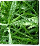 Grass Plus Water Canvas Print