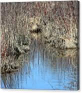 Grass Reflections Canvas Print