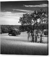 Grass Safari-bw Canvas Print