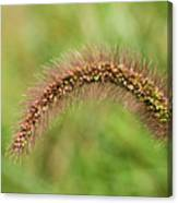 Grass Seed Canvas Print
