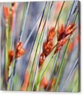 Grass Seeds Canvas Print