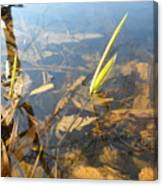 Grass Spears In Still Water Canvas Print
