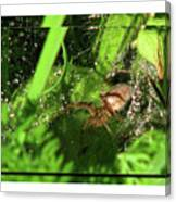 Grass Spider Canvas Print