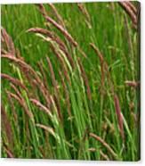 Grass3 Canvas Print
