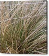 Grasses 5 Canvas Print