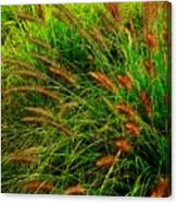 Grasses In The Verticle Canvas Print