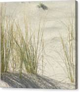 Grasses On The Beach Canvas Print