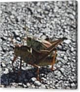 Grasshoper Love Canvas Print