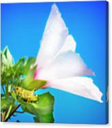 Grasshopper And Blue Sky Canvas Print