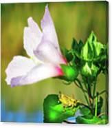 Grasshopper And Flower Canvas Print